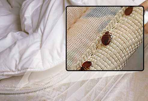 bed bug hiding in mattress